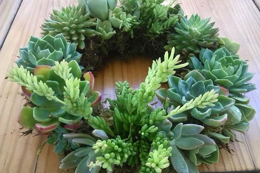 Succulent Wreath Cl